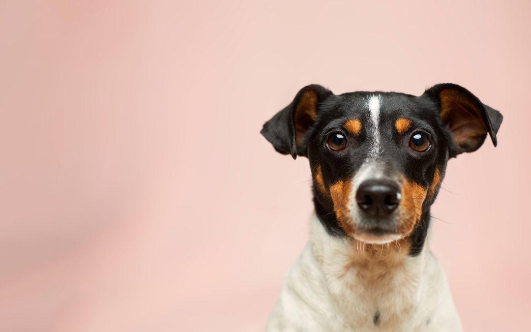 Hundefutter-Onlineshop